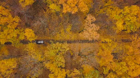 fall through : Aerial view on car driving through autumn forest road. Scenic autumn landscape Stock Footage