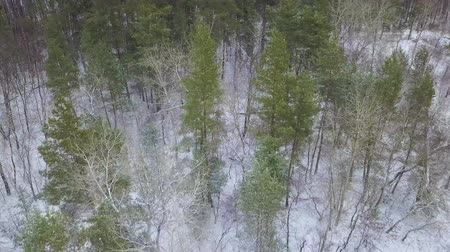 wilderness area : View from height to the winter forest covered with snow Stock Footage