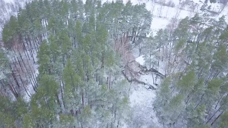 местность : View from height to the winter forest covered with snow with a lost house in the middle of it