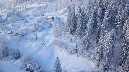 snow covered spruce : Flight over snowy mountain coniferous forest. Clear sunny frosty weather