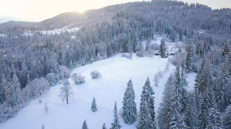 lucfenyő : Flight over snowy mountain coniferous forest at sunset. Clear sunny frosty weather Stock mozgókép