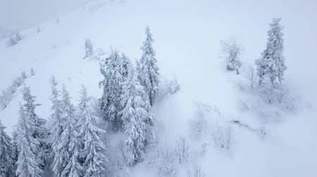 snow covered spruce : Flight over snowstorm in a snowy mountain, uncomfortable unfriendly winter weather. Stock Footage