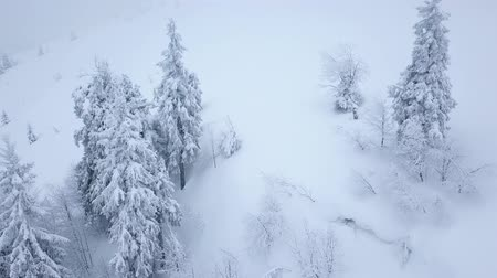 lucfenyő : Flight over snowstorm in a snowy mountain coniferous forest, uncomfortable unfriendly winter weather.