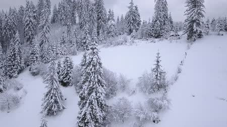 cam : Flight over snowy mountain coniferous forest. Overcast frosty weather
