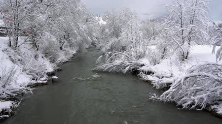 snow covered spruce : Winter mountain river surrounded by trees and banks of snow-covered