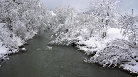 tampado : Winter mountain river surrounded by trees and banks of snow-covered