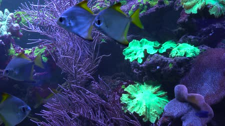 nadador : Bright fish swim in the aquarium