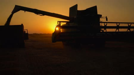 otruby : Silhouette of combine harvester pours out wheat into the truck at sunset. Harvesting grain field, crop season.