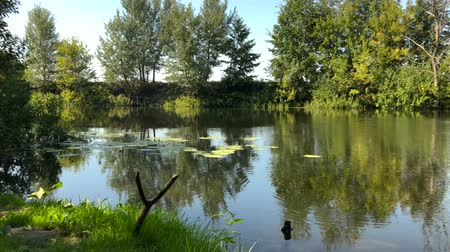 sabah : Time lapse view of the river in a clear sunny summer day and reflection of trees in the water. Ukraine Stok Video
