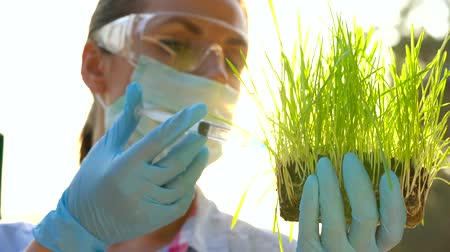 laboratorium : Woman agronomist in goggles and a mask examines a sample of soil and plants