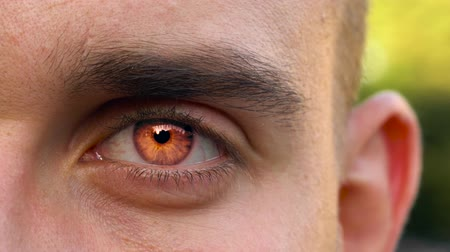 bulva oční : Red eye of vampire looks straight into the camera. Halloween symbol