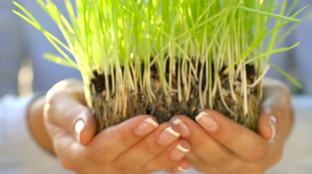 gleba : Female hands hold out handful of soil with green grass. Concept of growth, care, sustainability, protecting the earth, ecology and green environment Wideo