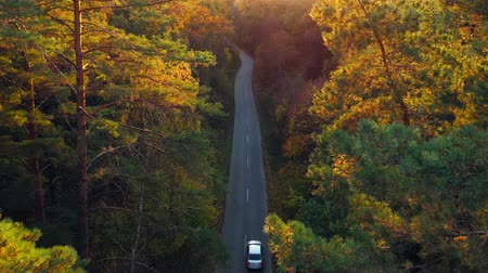bird's eye view : Aerial view on car driving through autumn forest road. Scenic autumn landscape Stock Footage