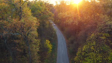 dżungla : Aerial view on car driving through autumn forest road. Scenic autumn landscape Wideo