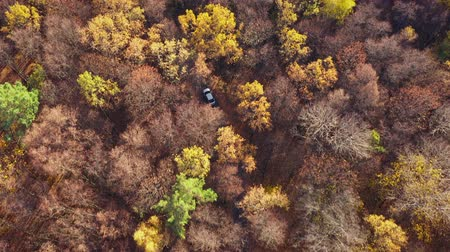 podróż : Aerial view on car driving through autumn forest road. Scenic autumn landscape Wideo