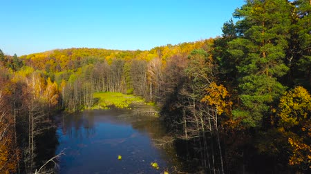 podróż : Aerial view of the pond and the bright autumn forest on its shore. Forest is reflected on the surface of the pond