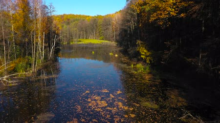 marsh : Aerial view of the pond and the bright autumn forest on its shore. Forest is reflected on the surface of the pond