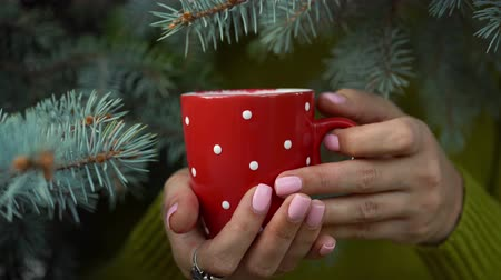 descontraído : Woman hands holding a cozy red mug against the background of pine branches