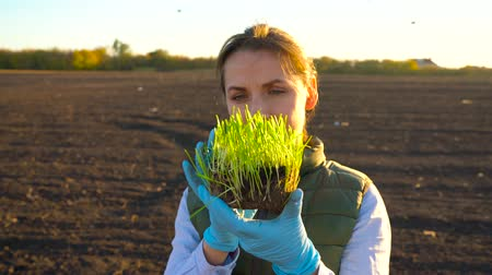 földműves : Female farmer examines a sample of seedlings before planting it in the soil