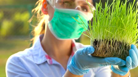 laboratorium : Woman scientist in goggles and a mask examines a sample of soil and plants