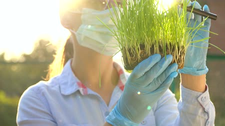 raiz : Woman scientist in goggles and a mask examines a sample of soil and plants through a magnifying glass Vídeos