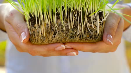 kırılganlık : Female hands hold out handful of soil with green grass. Concept of growth, care, sustainability, protecting the earth, ecology and green environment Stok Video