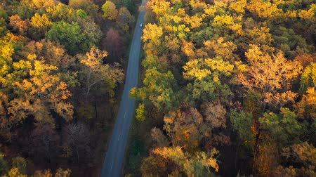 achtergrond groen : Aerial view on car driving through autumn forest road. Scenic autumn landscape Stockvideo