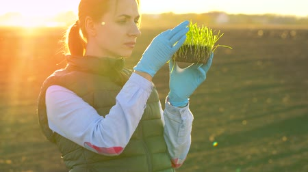 fermiers : Female farmer examines a sample of seedlings before planting it in the soil