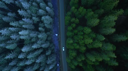 podróż : Aerial view of car riding on the road in the coniferous forest among the mountains