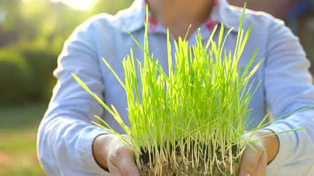 piccolo : Female hands hold out handful of soil with green grass. Concept of growth, care, sustainability, protecting the earth, ecology and green environment Filmati Stock