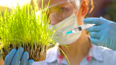 raiz : Woman scientist in goggles and a mask examines a sample of soil and plants