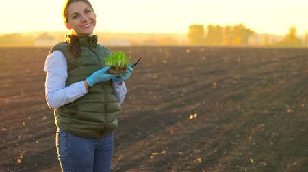 földműves : Female farmer stands with a sample of seedlings in her hand about to plant it in the soil.
