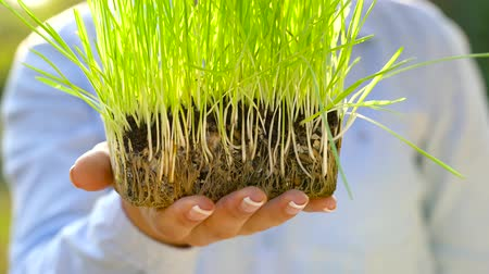 achtergrond groen : Female hands hold out handful of soil with green grass. Concept of growth, care, sustainability, protecting the earth, ecology and green environment Stockvideo