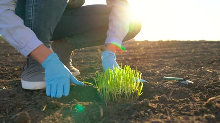 росток : Female farmer puts a seedling prototype in the ground
