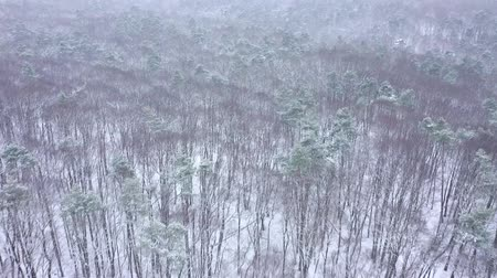 sníh : View from the air of winter forest during a snowfall