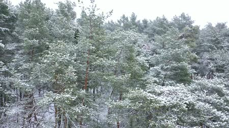 meseország : View from the air of winter forest during a snowfall