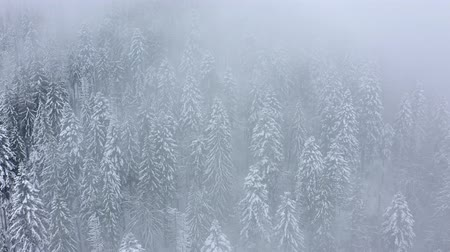 снежинки : Flight over snowstorm in a snowy mountain coniferous forest, foggy unfriendly winter weather. Filmed at various speeds: normal and accelerated