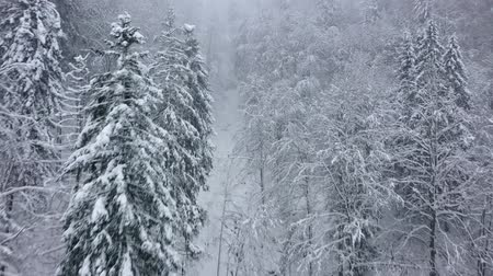 松 : Flight over snowstorm in a snowy mountain coniferous forest, foggy unfriendly winter weather. 動画素材