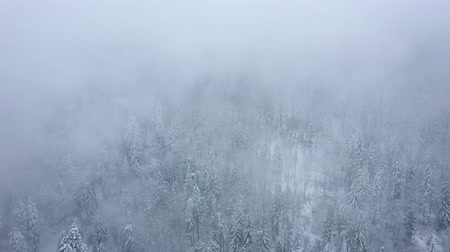 松 : Flight over snowstorm in a snowy mountain coniferous forest, foggy unfriendly winter weather. Filmed at various speeds: normal and accelerated