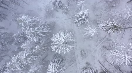 ladin : Flight over snowstorm in a snowy mountain coniferous forest, foggy unfriendly winter weather. Stok Video