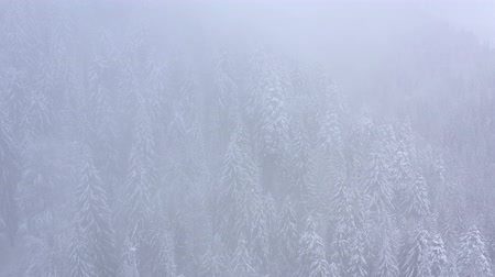 снежинки : Flight over snowstorm in a snowy mountain coniferous forest, foggy unfriendly winter weather. Стоковые видеозаписи