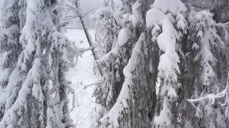 снежинки : Aerial view of snow covered trees in the mountains in winter Стоковые видеозаписи