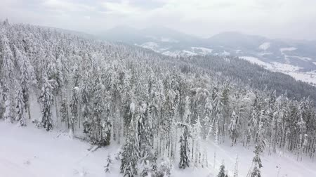 brancos : Flight over snowstorm in a snowy mountain coniferous forest, foggy unfriendly winter weather. Stock Footage