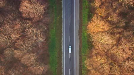 biologia : View from the height of the traffic on the road surrounded by autumn forest