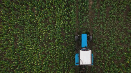 gleba : Top view of tractor treats agricultural plants on the field Wideo
