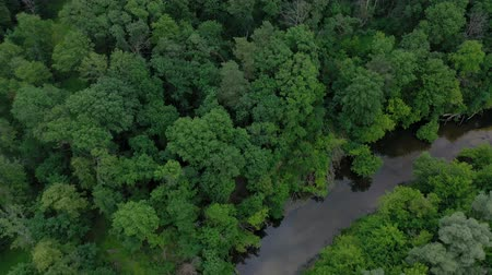 sabah : Aerial view of the beautiful landscape - the river flows among the green deciduous forest. Filmed at different speeds - accelerated and normal