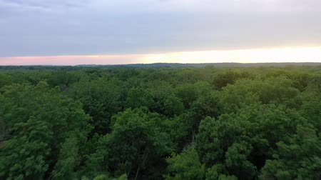 dżungla : Aerial view of the beautiful landscape - green deciduous forest at sunset
