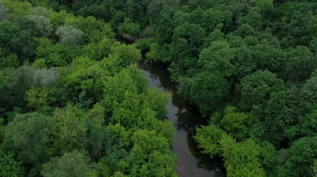 altura : Aerial view of the beautiful landscape - the river flows among the green deciduous forest