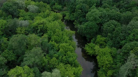 frondoso : Aerial view of the beautiful landscape - the river flows among the green deciduous forest. Filmed at different speeds - accelerated and normal