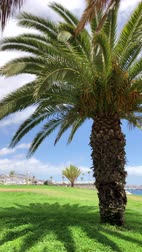 grama verde : Vertical video. Palm trees on the green grass. Sea or ocean on the background